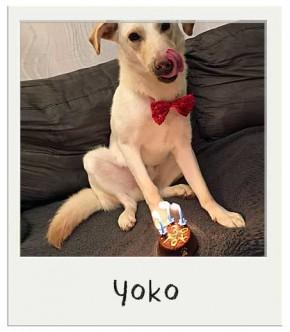 Yoko - Gâteau d'anniversaire pour chiens BIO