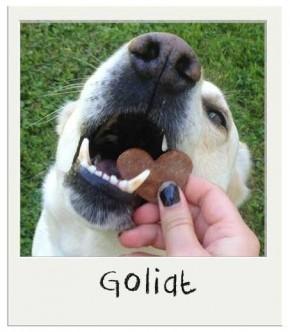 Récompenses chiens Sans Grains Patates Douces BIO