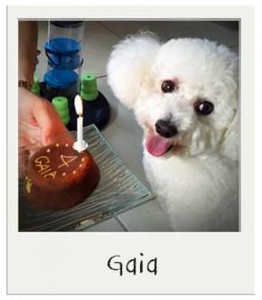 Gaia - Gâteau d'anniversaire pour chiens BIO