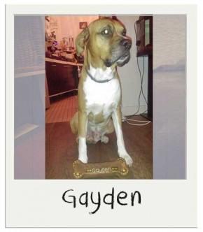 Gayden