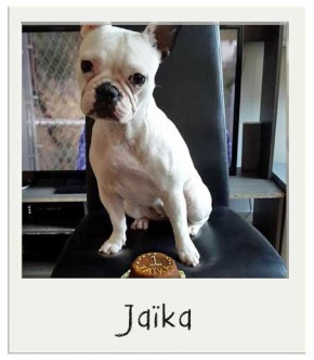Jaika - Gâteau pour chiens BIO
