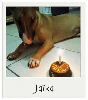 Jaika - Gâteau d'anniversaire pour chiens BIO