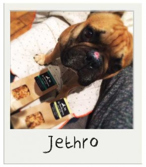 Jethro - Mini friandises Miel