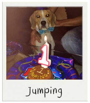 Jumping avec son Gateau d'anniversaire