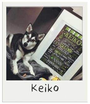 Keiko affiché personnalisé pour chiens