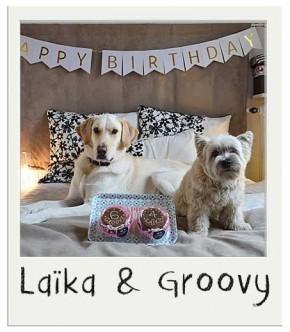 Laïka et Groovy