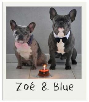 Zoé et Blue - Gâteau pour chien BIO